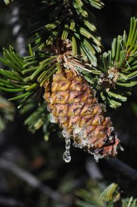 pinepic-680x1024